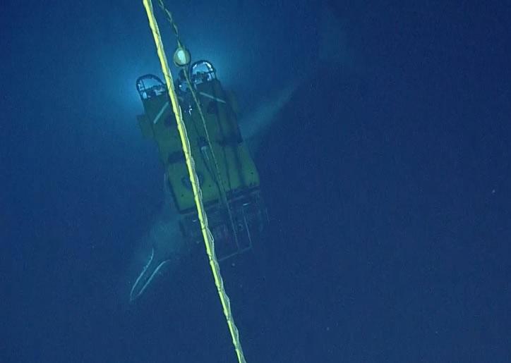 抹香鲸徘徊了15分钟,没有触仪器或电缆后就游走。