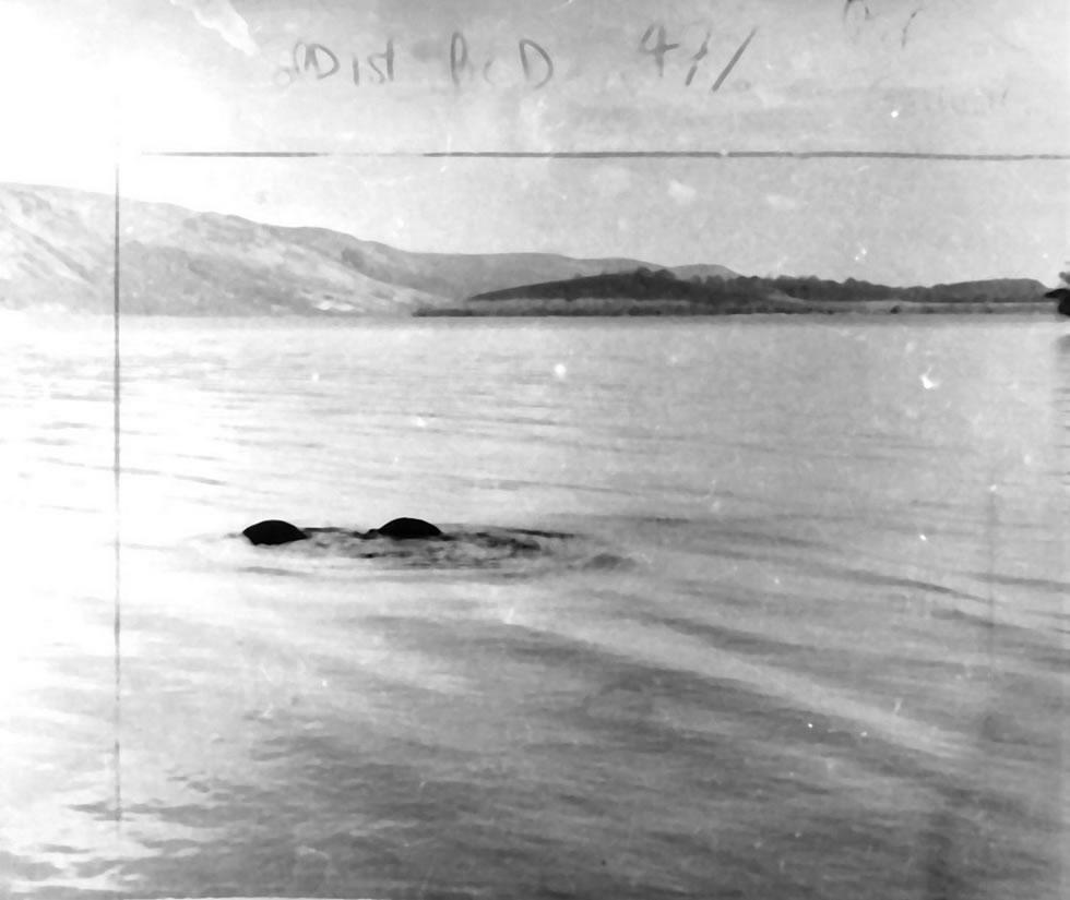 尼斯湖水怪照片曝光81周年:英国《镜报》盘点与这种神秘生物有关的20个有趣故事