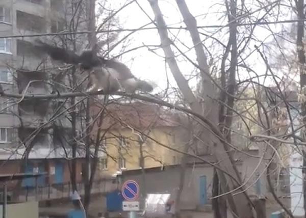 黑鸟(左)高速飞下,用爪突袭白猫(右)的头部。