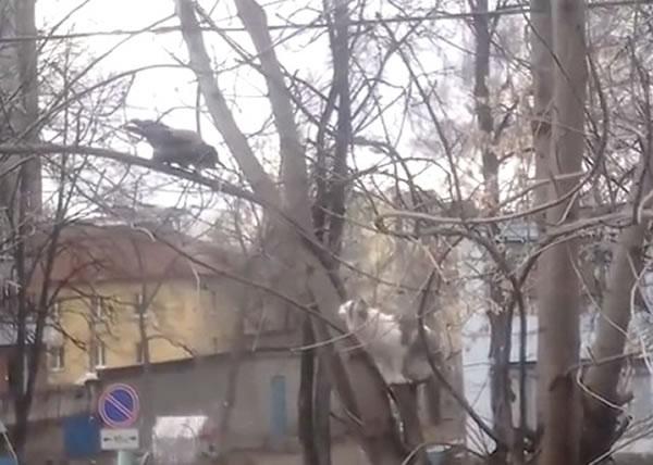 一猫(右)一鸟(左)对望叫阵。