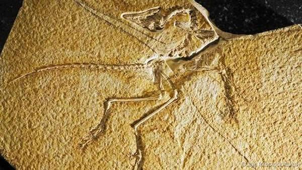 首个始祖鸟化石发现于1861年