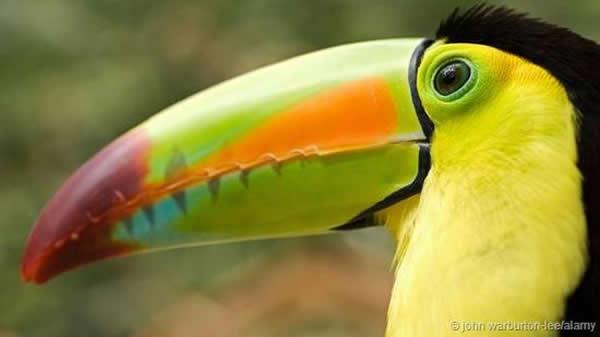 鸟类喙部形态大小不一