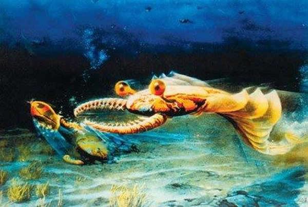 奇虾体长可能超过2米 是已知最庞大的寒武纪动物