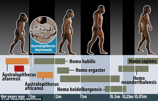 最新发现的Australopithecus deyiremeda与阿法南方古猿生活在同一时期。