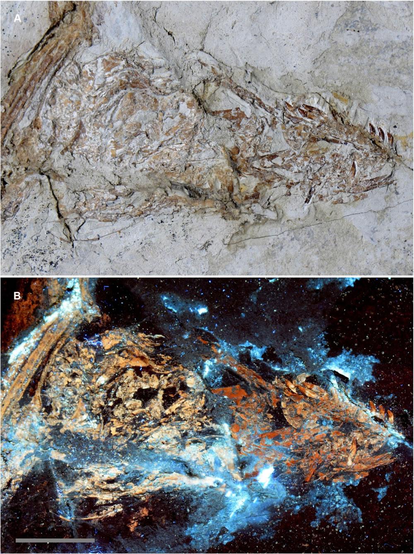 化石研究新技术,该新技术名为激光刺激荧光(LSF)