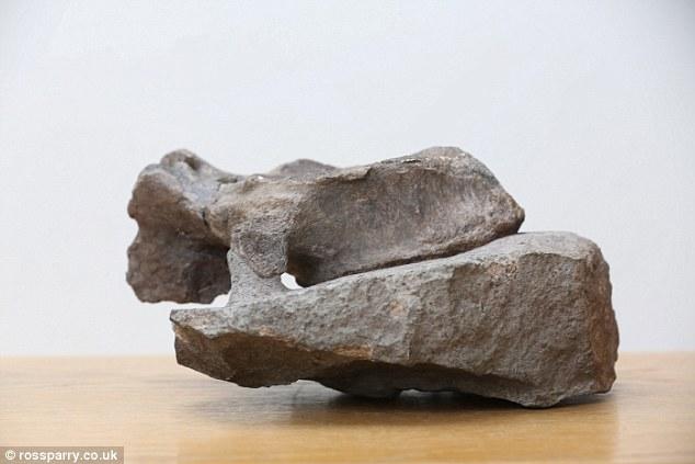 如图所示,这块脊椎骨属于一种蜥脚类恐龙,发现地点位于海岸悬崖壁下方,目前尚未发现其它的恐龙骨骼属于同一物种。