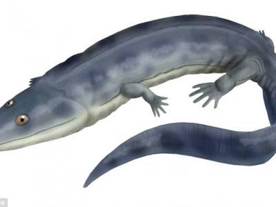 科学家首次证实最早从水中到陆地上生活的脊椎两栖动物源自南半球冈瓦纳大陆