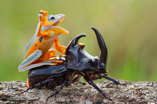 所有物种里大约25%都属于甲虫