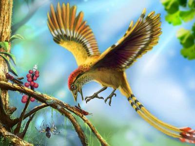 巴西发现第一块早白垩世冈瓦纳古大陆的鸟类化石样本