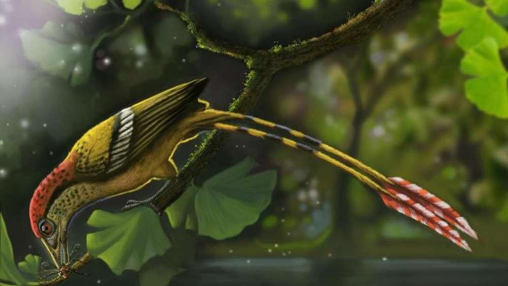 巴西发现最完整的来自早白垩世冈瓦纳大陆的鸟类化石样本