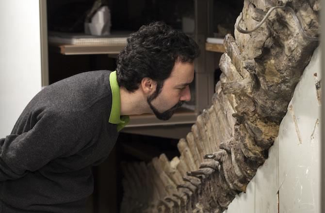 7500万年前白垩纪恐龙骨头化石中发现类似红细胞的结构和类似胶原蛋白的纤维
