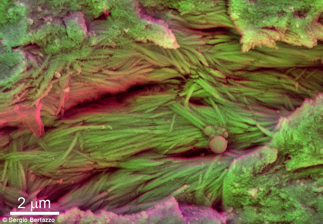 科学家发现7500万年历史的恐龙红细胞和皮肤残余物