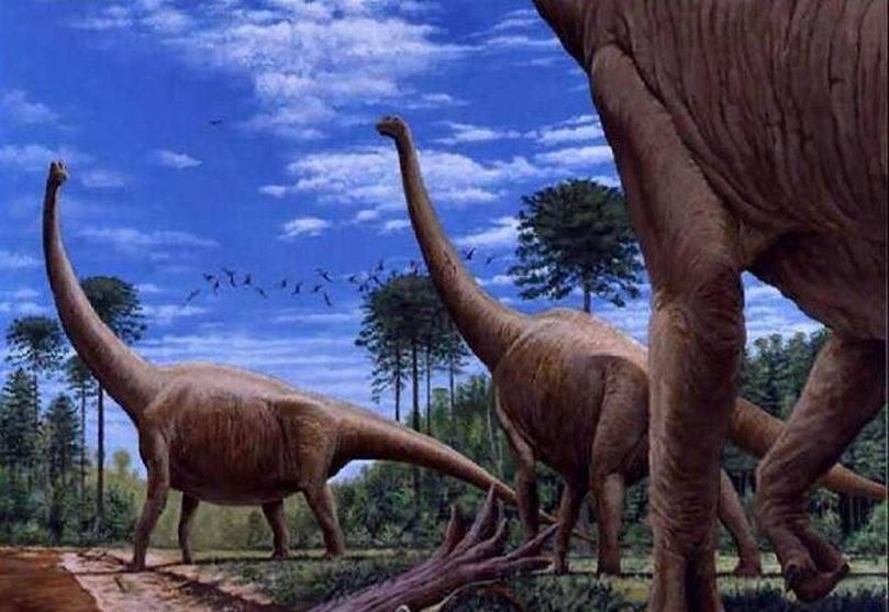 阿根廷龙体长大于蓝鲸:最大的恐龙物种一直倍受争议,近期一项研究才揭晓其中的谜团,生活在9700万-9400万年前的阿根廷龙体长40米,高度7.3米,体重70吨,