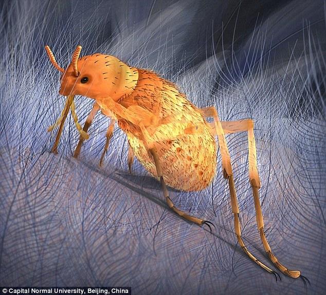 恐龙跳蚤比现代跳蚤体型大10倍:如果现代跳蚤令你十分抓狂,那么寄生在恐龙身体上的跳蚤会令你感到恐惧!最大的雌性恐龙跳蚤体长为20.6毫米,雄性体长14.7毫米,