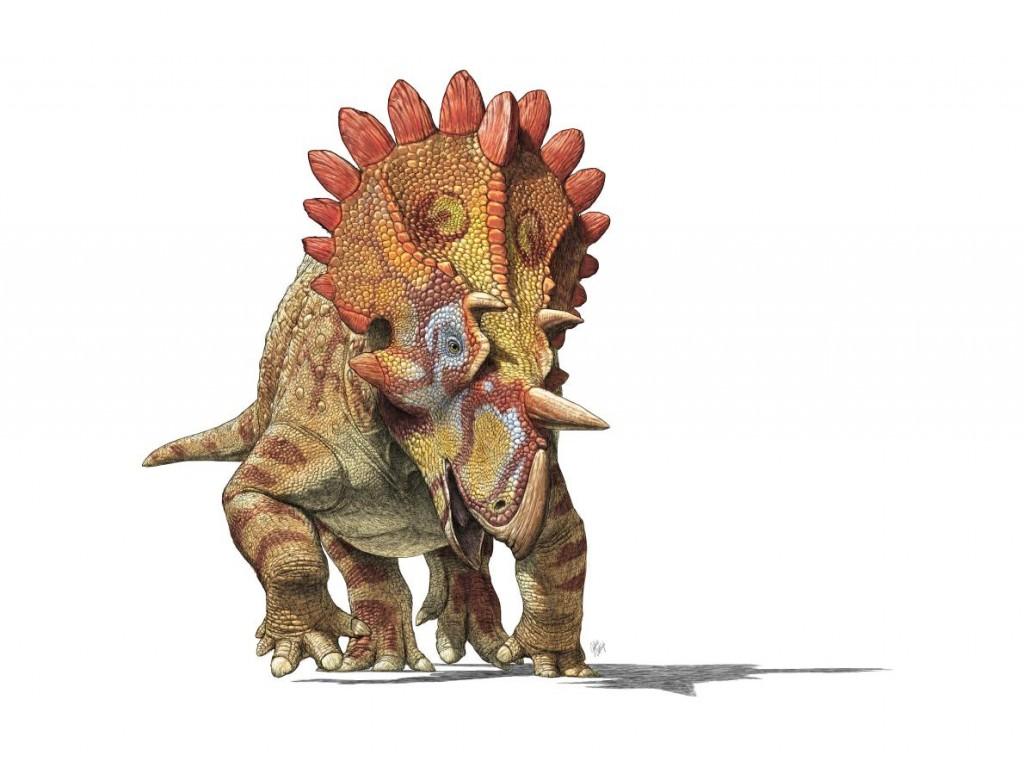 彼得休斯角龙(Regaliceratops peterhewsi)眼睛上方短而粗的角(如这张画家的想像图所示),让它的发现者想到「地狱怪客」这个漫画角色。 Ar