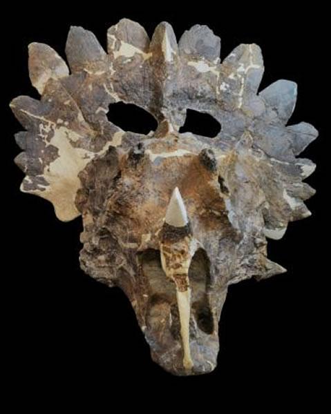 一位科学家表示,彼得休斯角龙的颈盾极为花俏,「令人叹为观止」。 Photograph by Sue Sabrowski, Courtesy Royal Tyrr
