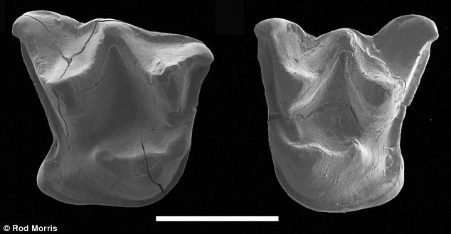 新西兰南部奥塔戈岛发现新型蝙蝠化石