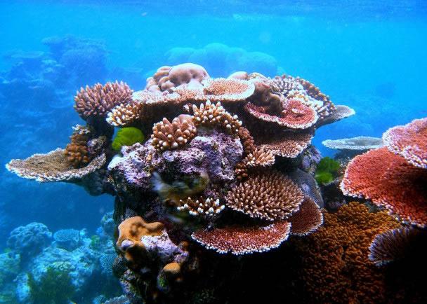 生物灭绝令珊瑚礁1亿年内无法重新生长。