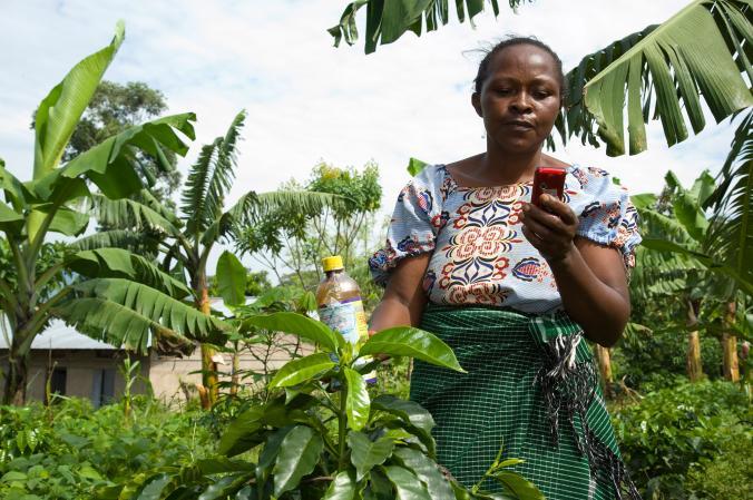 乌干达的一名咖啡农联络当地的农业资讯中心,好在使用杀虫剂之前了解更多资讯。 Photograph by Roel Burgler/ Hollandse Hoog