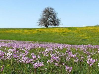 美国加利福尼亚一处草原的植物物种流失与气候干燥性的不断增加有关
