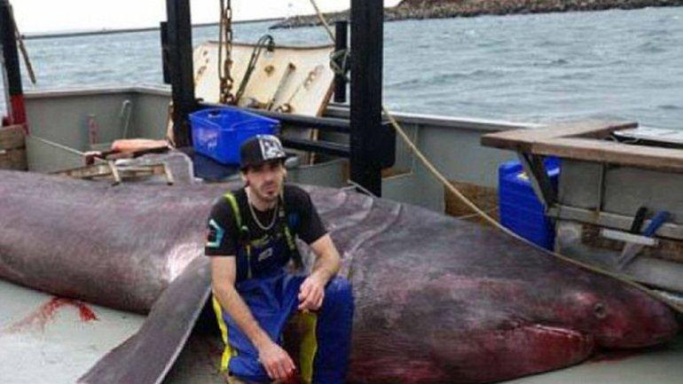 澳洲捕获罕见巨大象鲛(姥鲨)