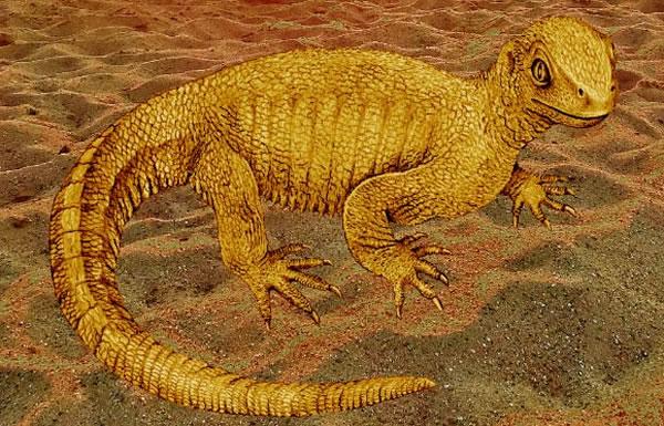 """《自然》杂志发表一种曾生活在2.4亿年前的原始龟类""""祖龟"""""""