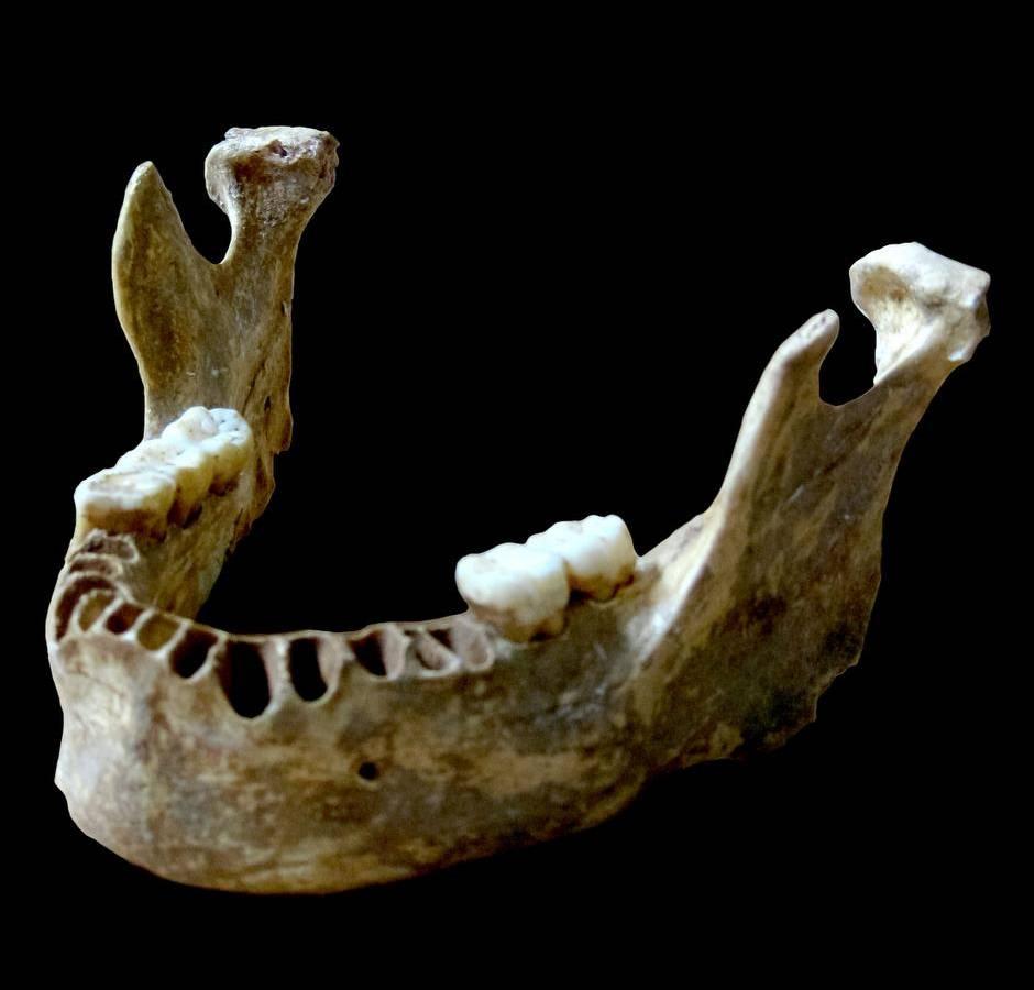 这块颔骨来自一个生活在4万年前的现代人。它具有一些尼安德特人的特征,而DNA研究也证实这个人有一个尼安德特祖先,他们之间只隔了三代。 Photograph by