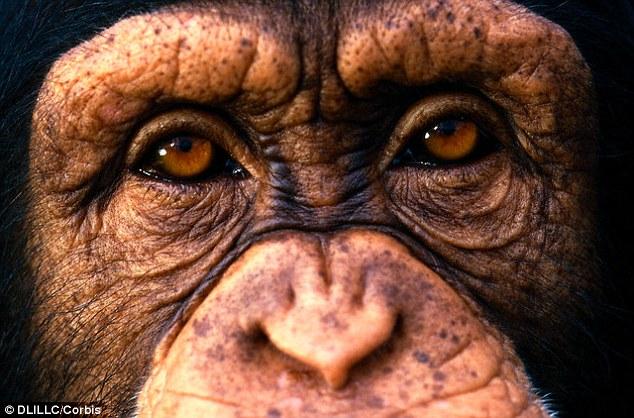 独特的眼眶结构使人类获得更好视野