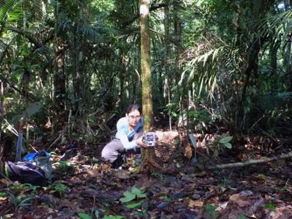 Maíra Benchimol正在设置一个照相机陷阱