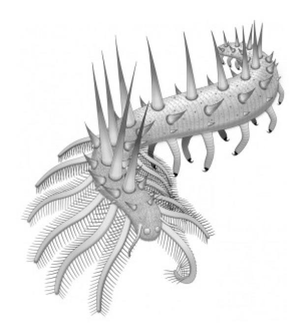 研究员收集化石上的资料,重构该虫外形。