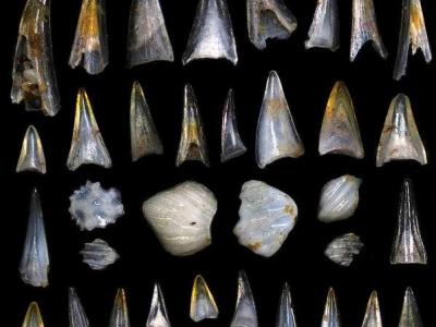 6600万年前大灭绝事件让鱼类逐渐占据海洋统治地位
