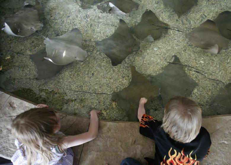 布鲁克菲尔德动物园的魔鬼鱼浅池,有多达54条魔鬼鱼缺氧死亡。