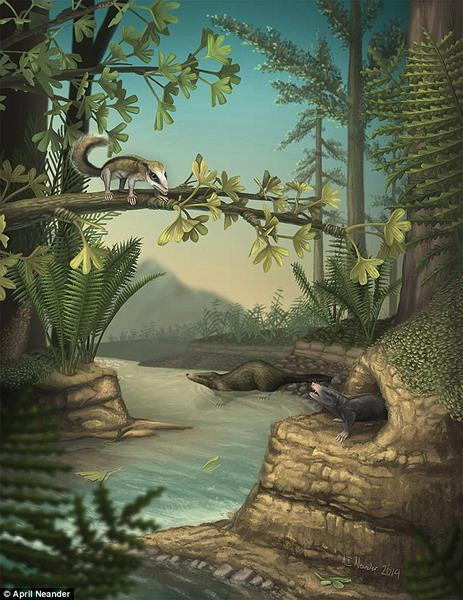 """科学家最新研究发现,侏罗纪中期恐龙时代,哺乳动物也经历了快速发展,该阶段出现""""进化爆炸式""""变化。"""