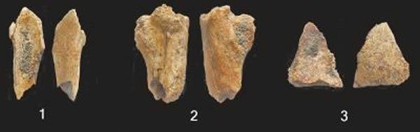 古人类化石:股骨、顶骨