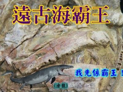 """澳洲昆士兰发现亿年前鱼化石""""cooyoo"""" 或是古老内陆海洋霸主"""