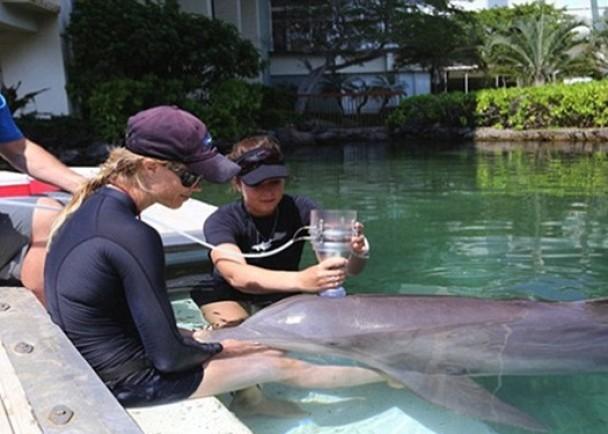 学者用类似漏斗的仪器了解海豚呼吸时空气的流量