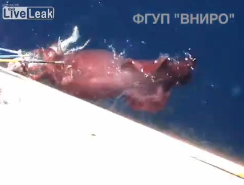 乌贼靠向船边偷食,水手以鱼叉驱赶。