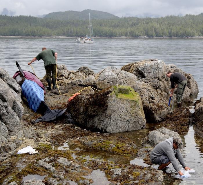 小虎鲸获当地市民洒水