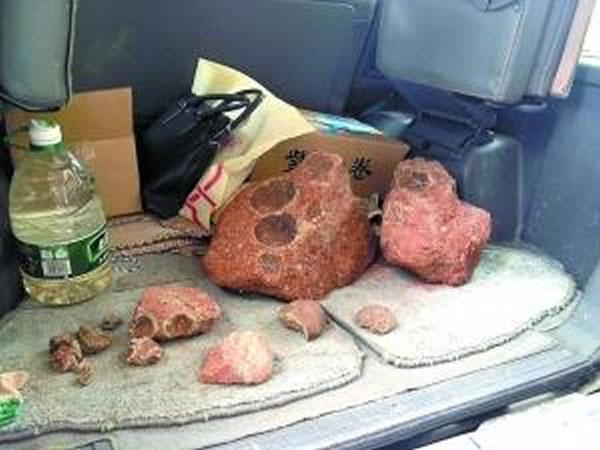 广东河源每天有人哄抢恐龙蛋化石