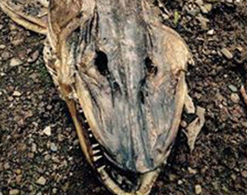 32岁的销售员贝克特说,他与女友漫步时发现这只怪兽尸体,感到十分吃惊。