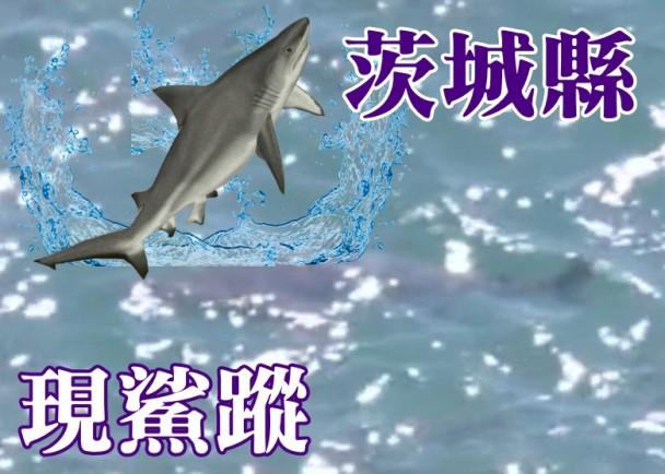 日本茨城县外海近日出现鲨鱼 或是大型铅灰真鲨(高鳍白眼鲛)