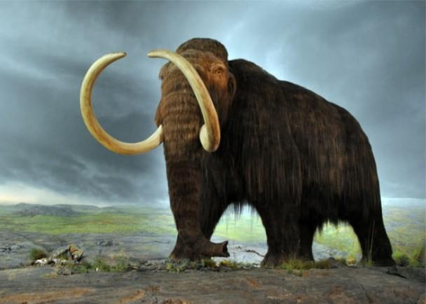长毛象尚有许多秘辛待考古学家拆解