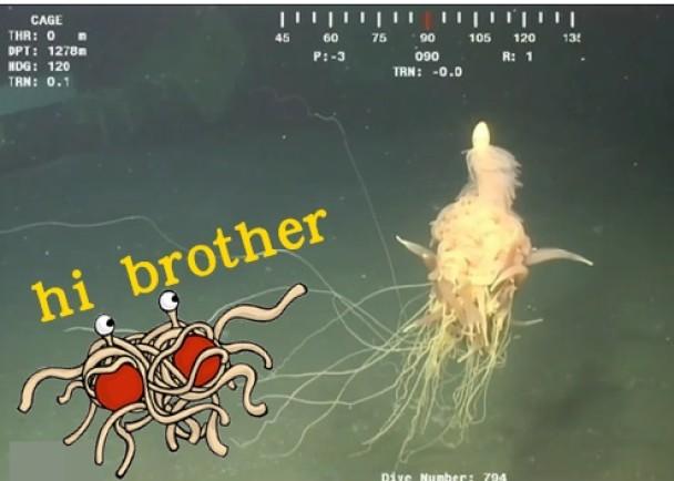 """""""意粉兽""""相信是管水母目生物"""