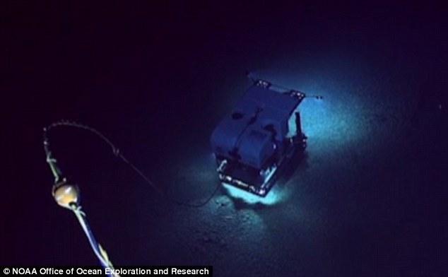 """夏威夷大学科学家迈克尔-加西亚介绍说,""""深海发现""""号还获取了许多关于水下火山活动的最新信息,这些水下火山是夏威夷群岛形成的重要因素之一。"""