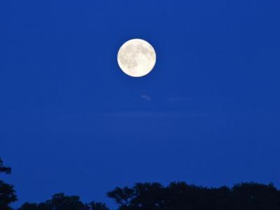 植物叶子的运动可能在一定程度上也受到月球引力的掌控