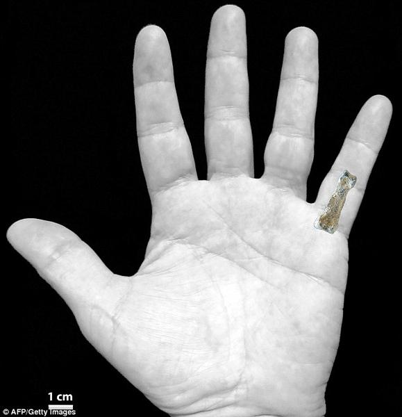 185万年前的小指骨与现代人类相比,长度更长