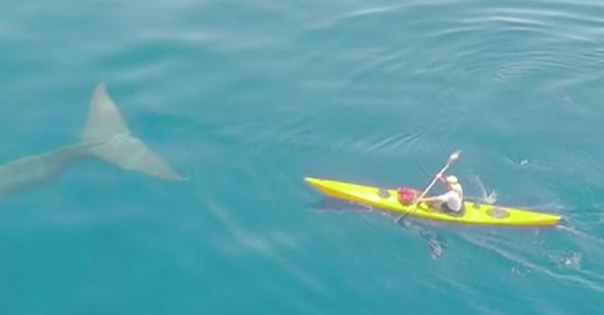 斯里兰卡印度洋,Patrick的朋友正在靠近蓝鲸。