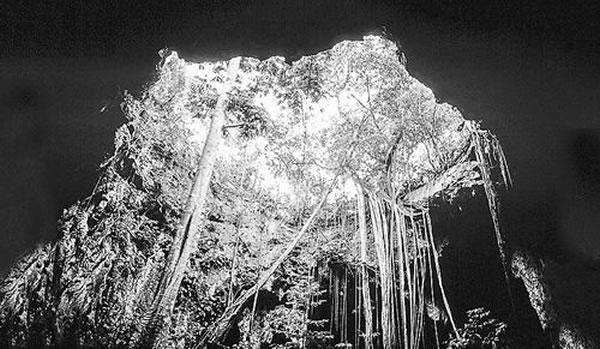 打破古生物工口日本邪恶漫画大全妖气学热带禁忌:用测序技术分析炎