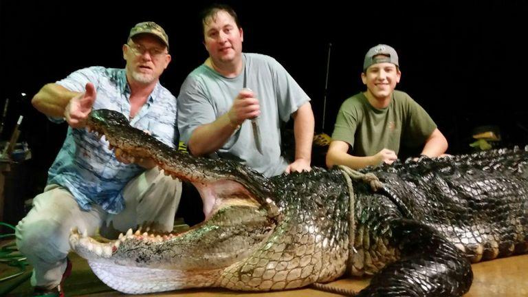 美国阿拉巴马州一座湖里捕获417公斤巨型短吻鳄
