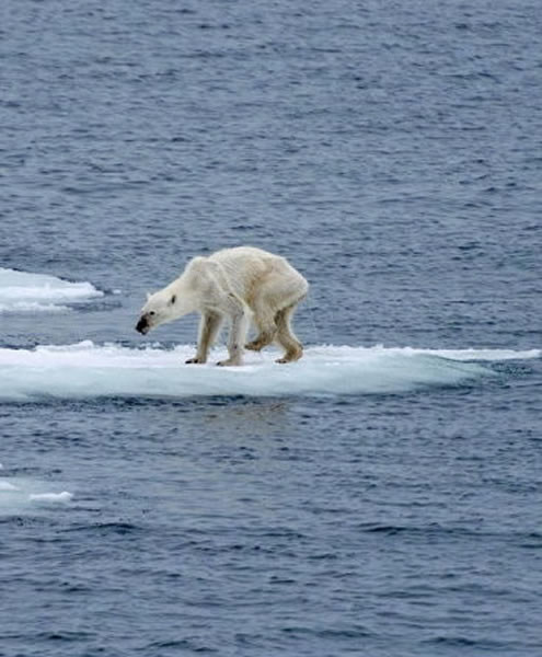 北极熊骨瘦如柴站在衣服上裤子腿穿浮冰怎么搭配大象好看吗图片